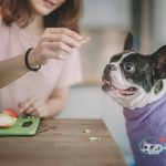 Benefits Of Applesauce For Dogs