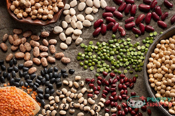 dog food without legumes