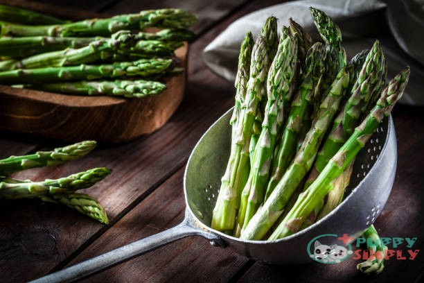 is asparagus good for dogs