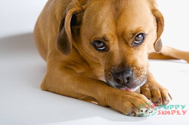 Why Do Dogs Lick and Bite Their Paws