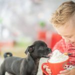 can dogs eat whipped cream